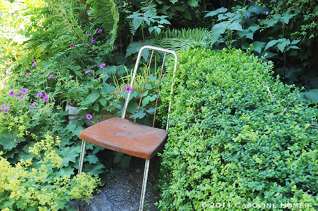 Rusty yet inviting chair amidst shady foliage