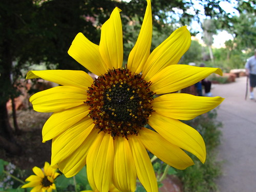 IMG_3802_Yellow_Flower_Zion_National_Park