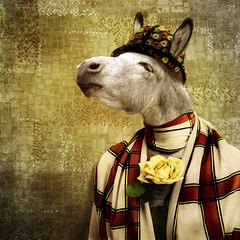 The fashion victim (Martine Roch) Tags: portrait cute fashion animal lady square funny donkey surreal photomontage surrealist martineroch thecharacters flypapertextures lescaractères