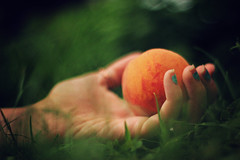 forbidden (AmyJanelle) Tags: orange macro green grass closeup fruit hands hand peach forbidden nails nailpolish