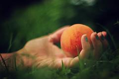 forbidden (AmyJanelle) Tags: orange macro green grass closeup fruit hands hand peach forbidden nails nailpolish