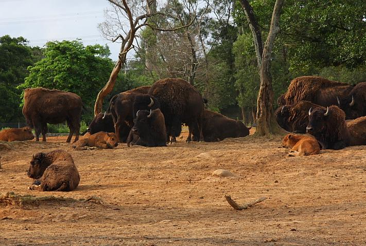 六福村動物園063