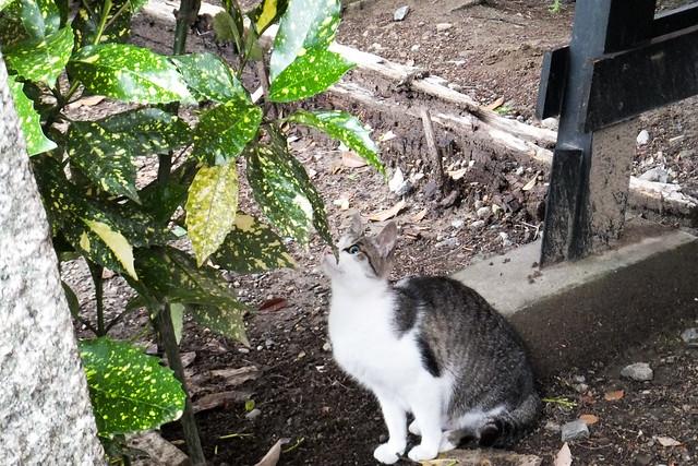 Today's Cat@2011-07-10