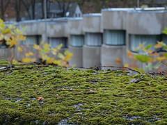 (Marc Schneppensief) Tags: church architecture concrete moss catholic dom modernism kathedrale kirche moderne expressionism architektur pilgrimage moos brutalism beton postwar wallfahrt expressionismus 60s70s böhm brutalismus neviges nachkrieg naturesreclaim 60er70er