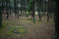 DSC_7093.jpg (ak.mish) Tags: landscapes russia balticsea knigsberg kaliningrad  curonianlagoon 2011   dancingforest  k k