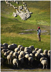 Time-out (Nespyxel) Tags: light rural landscape sheep shepherd flock duel luce pecore pastore castelluccio gregge intervallo nespyxel flockonflickr stefanoscarselli leuropepittoresque