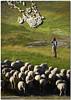 Time-out (Nespyxel) Tags: light rural landscape sheep shepherd flock duel luce pecore pastore castelluccio gregge intervallo nespyxel flockonflickr stefanoscarselli leuropepittoresque