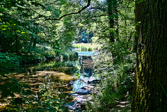 River Blyth Northumberland (berenice29) Tags: trees water nikon northumberland d3000 riverblyth mygearandme plesseywoodscountrypark