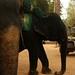 3 elefantes incomodam incomodam incomodam muito +