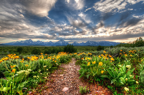 Path to Tetons with wildflowers