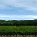 Plantacoes de vinho em Languedoc