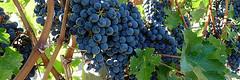 Pioneros vascos en la vitivinicultura argentina