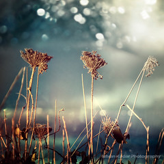 Unloved Flowers (fesign) Tags: flowers nature weed idream magicunicornverybest magicunicornmasterpiece —obramaestra— sbfmasterpiece sbfgrandmaster