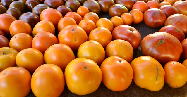 SOJ Tomato Variety