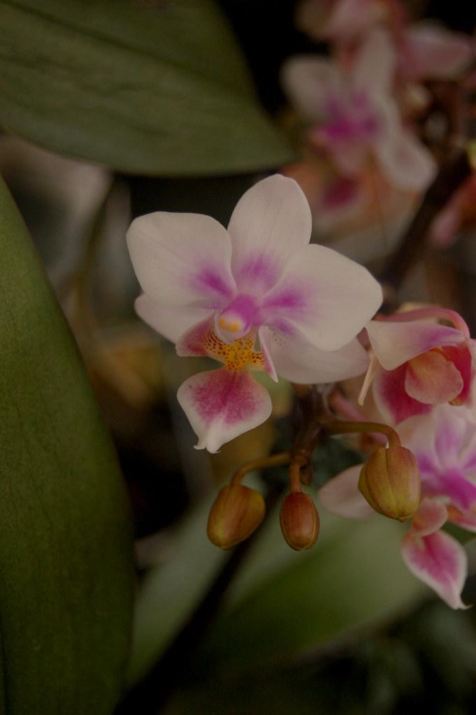 floria putrajaya 2011