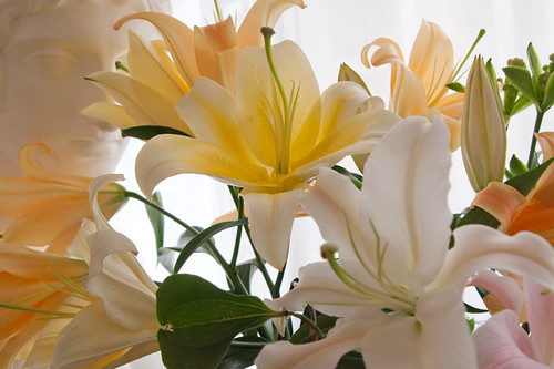 Oriental lilies &Mārs