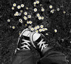 Converse & Daisies (Self-Confessed Photoholic ;)) Tags: flowers colour daisies converse selective