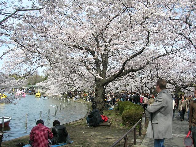 d7-23-ueno-park