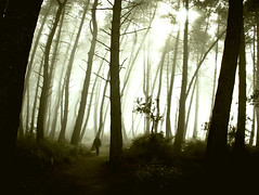 Forest Walk (Tim Bow Photography) Tags: trees newzealand people mist color colour tree tourism nature weather fog mystery forest landscape woods rotorua natural wildlife human nz mysterious mystical british lonely welsh visible geothermal waiotapu visibility svenska timboss81 landscapesofnewzealand timbowphotography timbowaugustportfolio