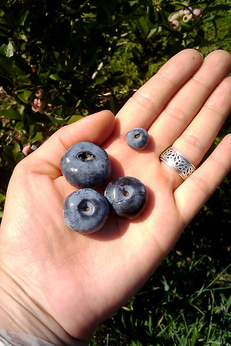 Blueberries 201101