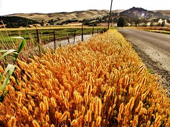 Country roads (Konabish ~ Greg Bishop) Tags: life california love america fence landscape outdoors freedom exploring magic wetlands marsh wildflowers fascination backroads rollinghills johndenver countryroads wildgrass floodplain vanishingbeauty offthebeatenpath yellowgrass beautyunnoticed greenvalleyearthquakefault
