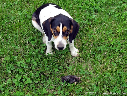 Bert and his mole 1 - FarmgirlFare.com