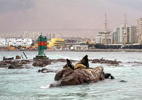 And Iquique has.. SEA LIONS!