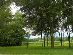 DSCN1938 green green grass of home (pinktigger) Tags: trees italy green nature italia meadow friuli fagagna friul oasideiquadris feagne oasideiquadri