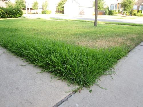 HoH_overgrown_dead_yard_1