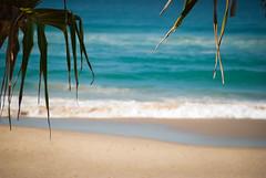 Beach at Surfers Paradise