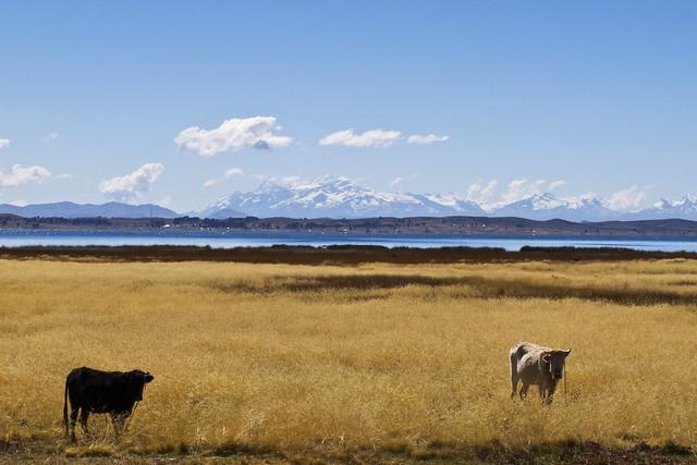 Titikaka Gölü ve Karlı Dağlar