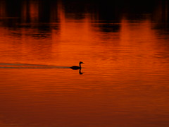 sunset (Hans-Jrgen Bckmann) Tags: sunset sun sonnenuntergang sonne 2011 instantfav