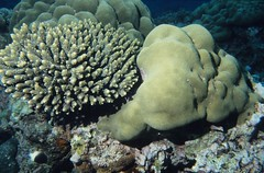 Comoros: corals of different kinds