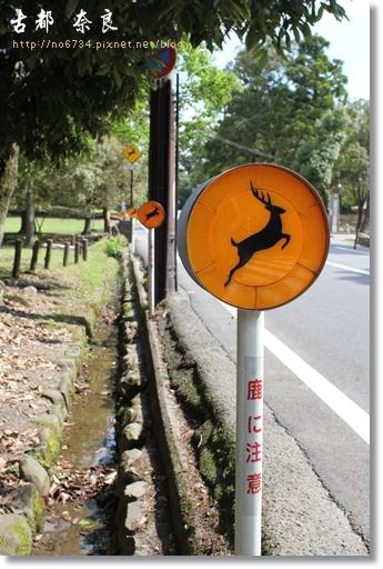 20110711_4thDay Nara _0705 f