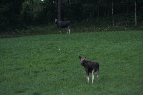 Child Elks