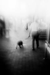 (Mawhrin Skel) Tags: dog blurry stuff