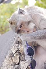 Ulu Watu; monkeys (Christiaan Arthur Hemerik) Tags: sunset bali indonesia uluwatu monkeys ulu ubud denpasar sanur jimbaran bluepoint watu