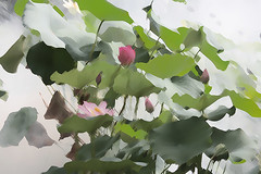 Lotus Flower - IMG_1101-1000-sb-as (Bahman Farzad) Tags: flower macro yoga peace lotus relaxing peaceful meditation therapy lotusflower lotuspetal lotuspetals lotusflowerpetals lotusflowerpetal