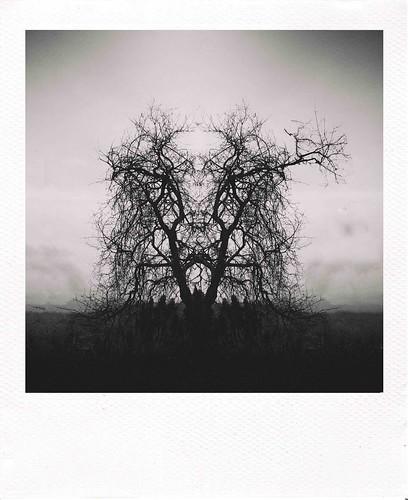 Black by Daniel Constante