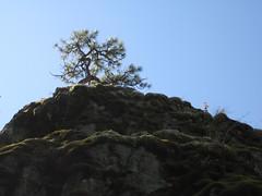 Asking Rock (Perkules) Tags: britishcolumbia provincialparks askingrock steinvalleynlakapamuxheritagepark