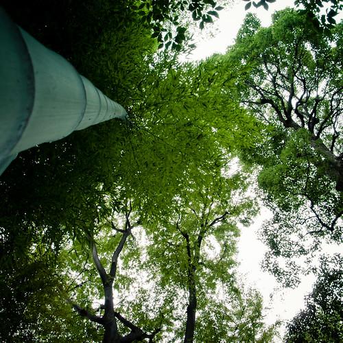 Up the Bamboo at Mukojima Hyakkaen Garden