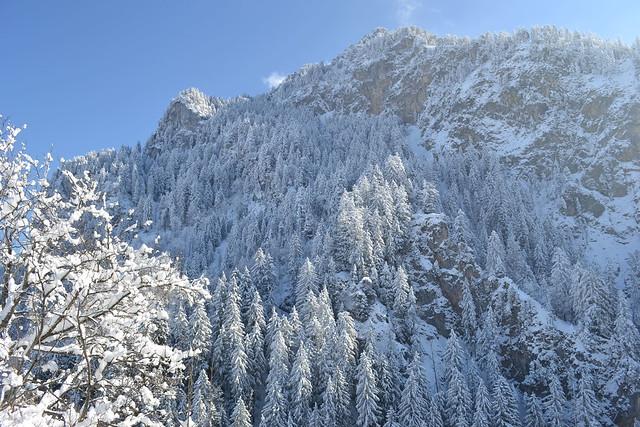 View from Neushwanstein Castle in Winter