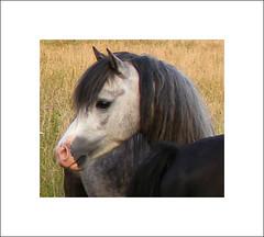 paardenhoofd (annelies_visser) Tags: paard paardenhoofd