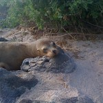 "Sea Lion <a style=""margin-left:10px; font-size:0.8em;"" href=""http://www.flickr.com/photos/14315427@N00/6006651639/"" target=""_blank"">@flickr</a>"
