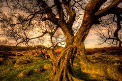 Surprise View Tree (malsmith1) Tags: tree peakdistrict tor rockpaper awardtree fleursetpaysages rockpaperexcellence