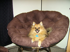 Max in a chair