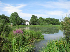 Ifield Mill Pond (Danny's Nature) Tags: uk fish flower london nature birds animals countryside kent high westsussex spiders wildlife insects hampshire bugs british amphibians mammals horsham gatwick reptiles crawley wildlifetrust southeastengland wealds