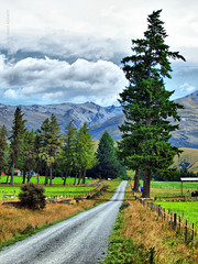 Countryside (Waleed Aldakhil) Tags: life road street flowers newzealand mountain mountains flower green nature beautiful grass landscape countryside nice rocks mt view natural stones steps scenic cook olympus canterbury diamond mount zealand nz ibrahim waleed hdr     1260mm  newzealanda diamoonds zuiko1260mm  e620   aldokhail olympuse620  aldakhil 50200mmzuikoswd