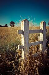 White post, golden field; Chaldon (W Ly) Tags: blue sky white field golden countryside nikon post suburban gates grain harvest summersend wheatfield sigma1020 d7000