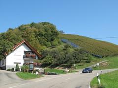 Durbach Weinberge (KlausundLuLu) Tags: schwarzwald burg stoltenberg weinberge weinreben ortenau durbach